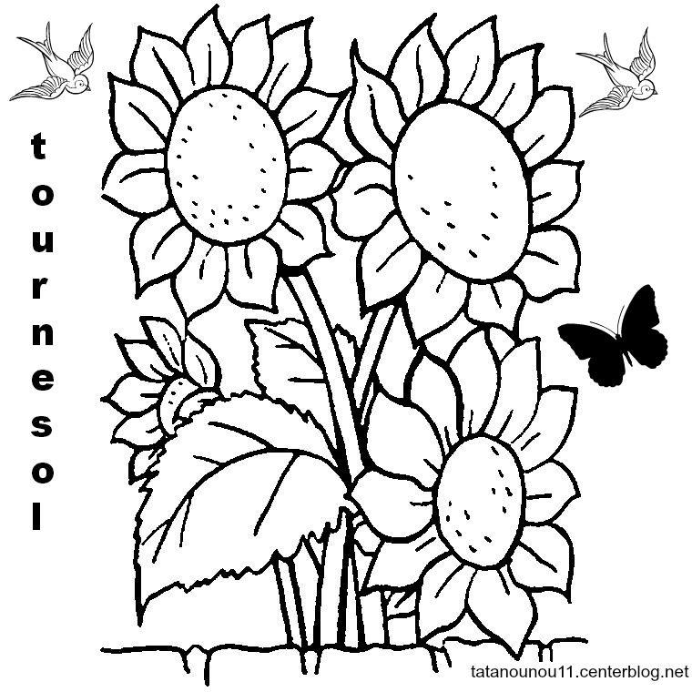 Atelier fleurs des champs page 3 - Coloriage tournesol ...